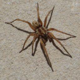 Уничтожение пауков в Ставрополе